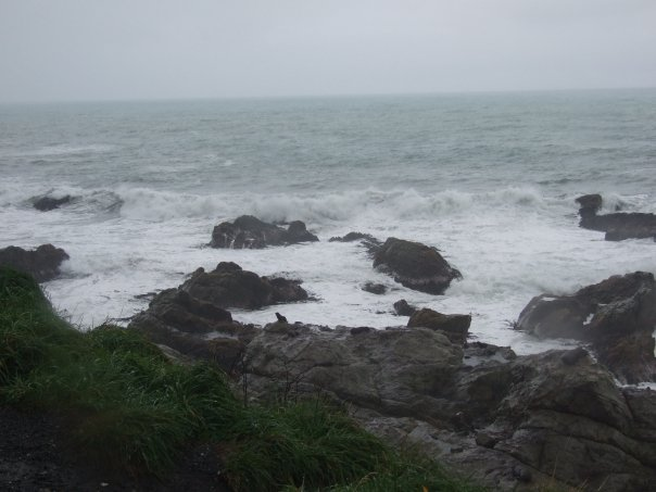 003 Seals at Paia Lookout, Kaikoura