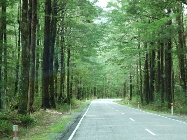 021 Beech forest on the road to Lewis Pass