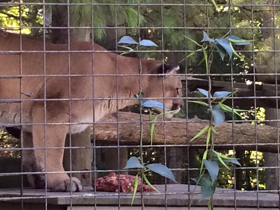 2015-09-24 15.08.36 Toronto Zoo