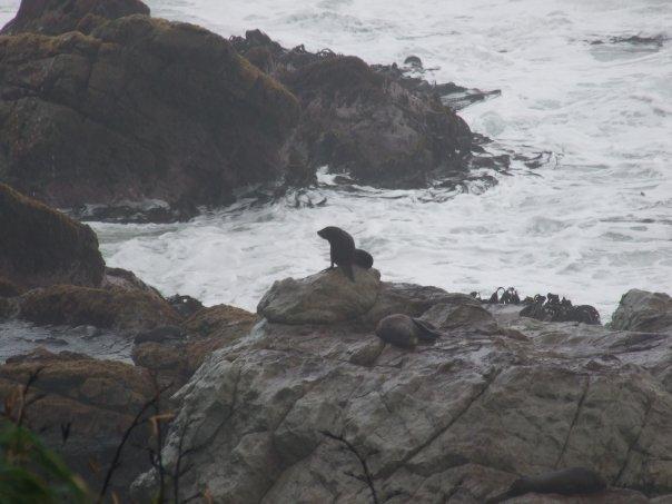 002 Seals at Paia Lookout, Kaikoura