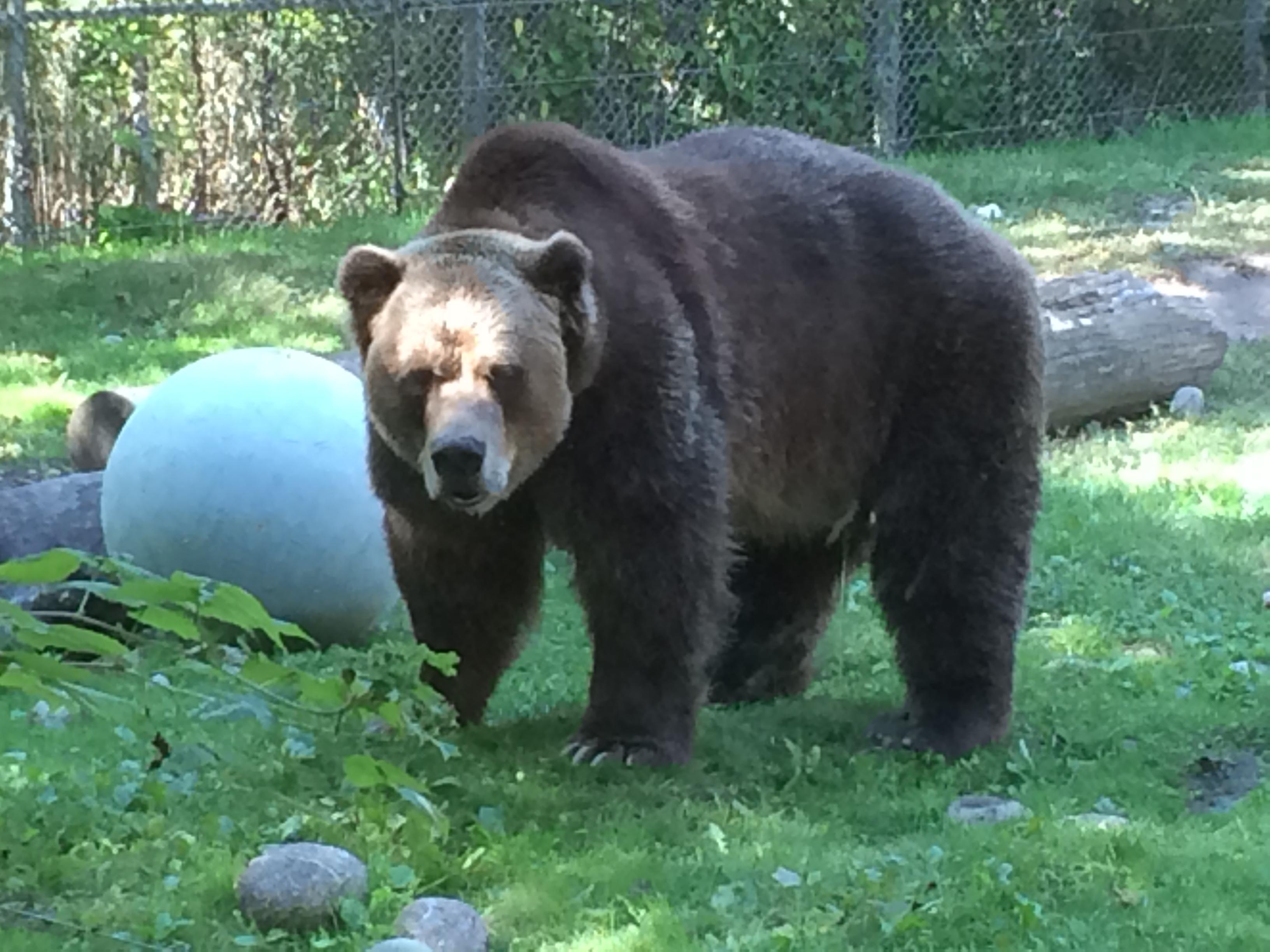 2015-09-24 14.55.40 Toronto Zoo