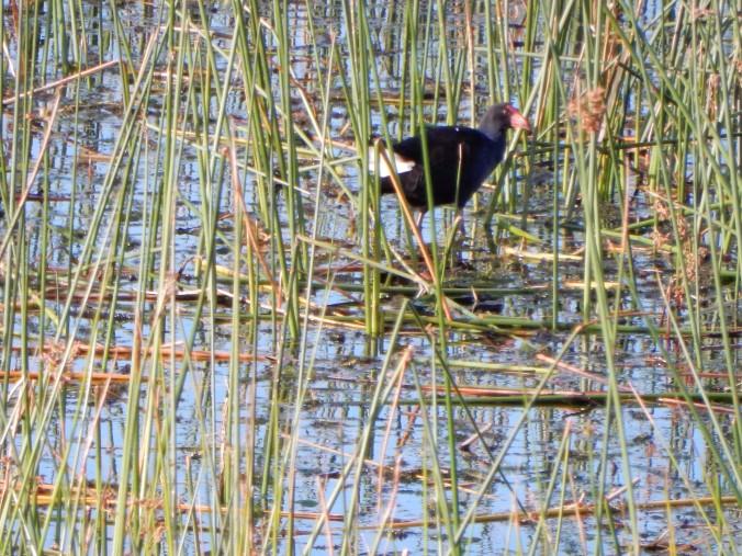 2015-04-08 16.58.03 Lake Purrumbete 5