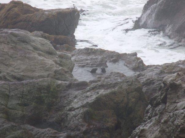 004 Seals at Paia Lookout, Kaikoura